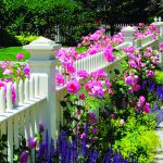 Garden Fence, Pink Roses