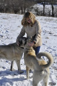 Jensen standing in the snow petting two Kangals