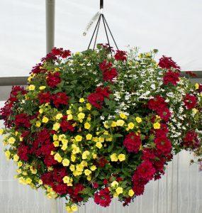 hanging basket of flower
