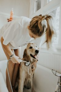 young women giving dog a bath