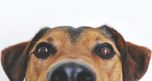 closeup of dog's face
