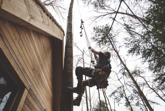 man climbing in tree