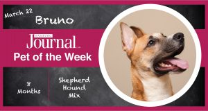 Hamburg Journal pet of the week banner