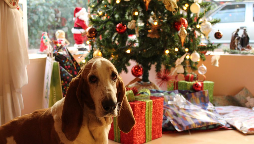 hamburg: a dog in front of a christmas tree and presents