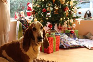 pets: a dog in front of a christmas tree and presents