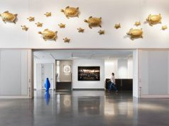 21c Museum Hotel: white walls with gold turtles hanging and a bright blue penguine