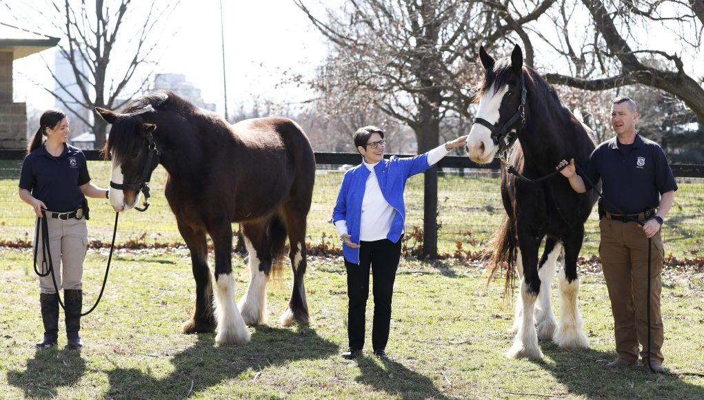 Pet News: three people with clydesdales