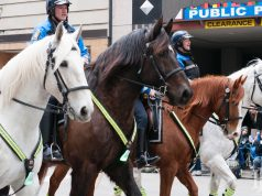Mounted Unit: police officers on horses