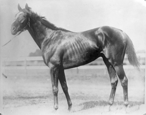 Sir Barton: black and white picture of a horse