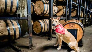 Pet: a dog with a red bandana surrounded by bourbon barrels