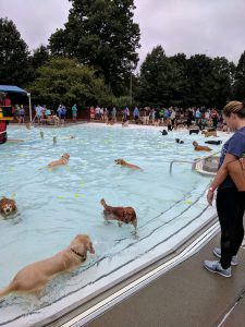 Pet: lots of dogs swimming in a pool with humans watching