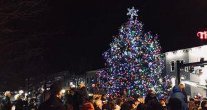 Garden: large christmas tree
