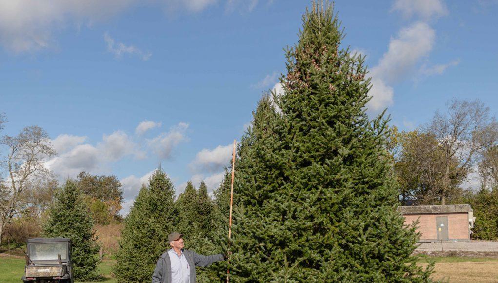 Christmas Tree at Nieman Tree Farm