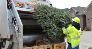 A man recycling a Christmas Tree in the back of a garbage truck